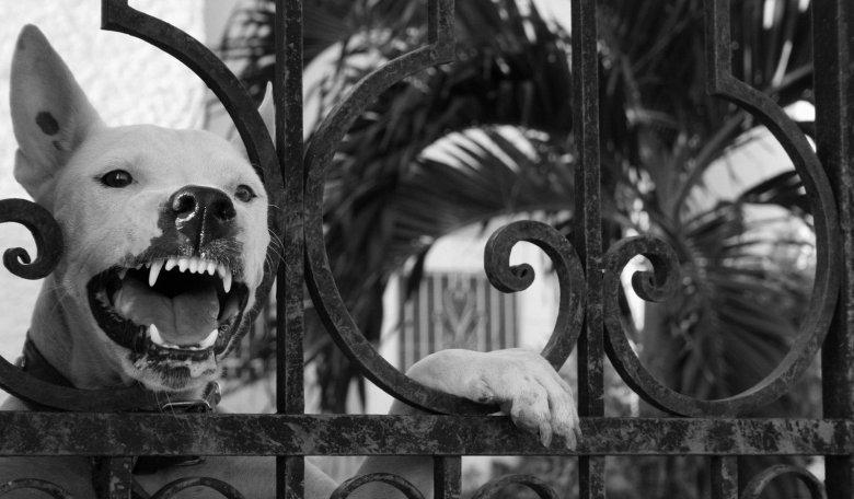 angry-dog-1307194